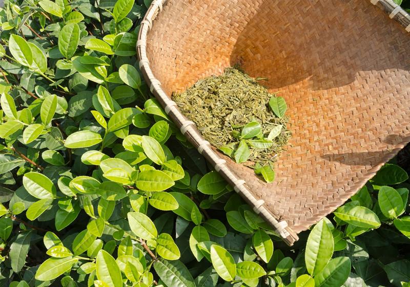green-tea-leaves_raw